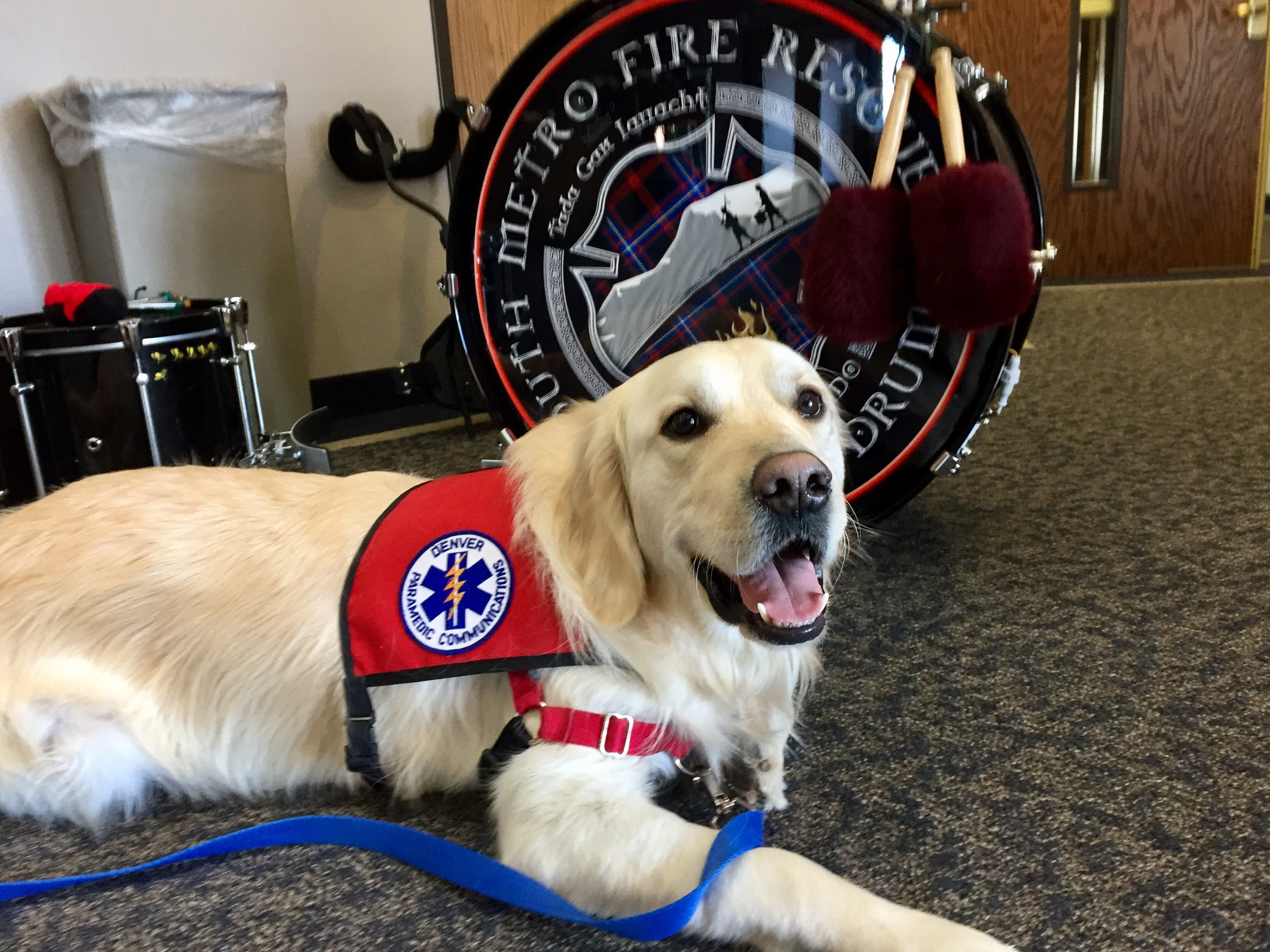 Cooper Therapy Dog